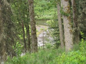 Alaska river between trees and wilderness