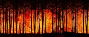 large forest fire